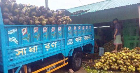 চকরিয়ায় তালের শাঁস বিক্রির ধুম,ক্রেতাদের বেড়েছে কদর | ChannelCox.com